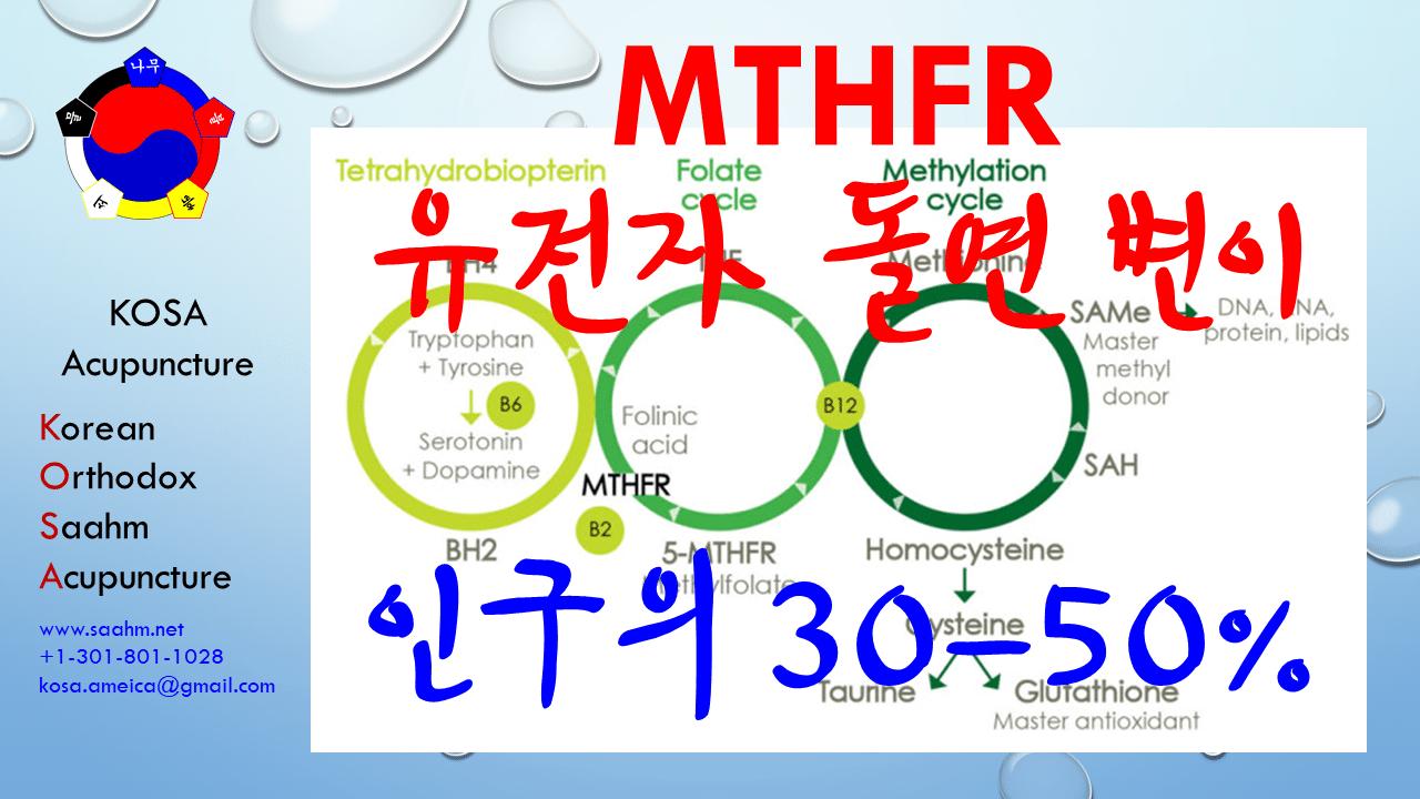 MTHFR 유전자 돌연변이